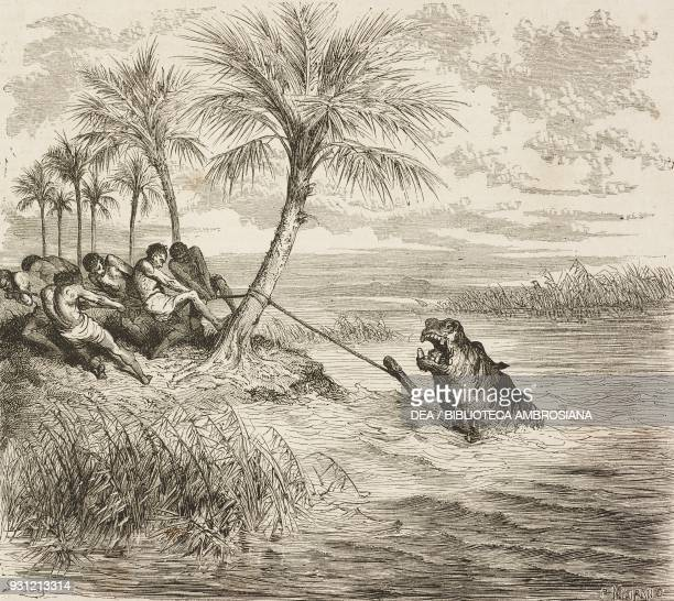 Hippopotamus hit by a harpoon drawing by Gustave Dore from a sketch by Andersson from Adventures and hunting of the traveller Carl Johan Anderson in...