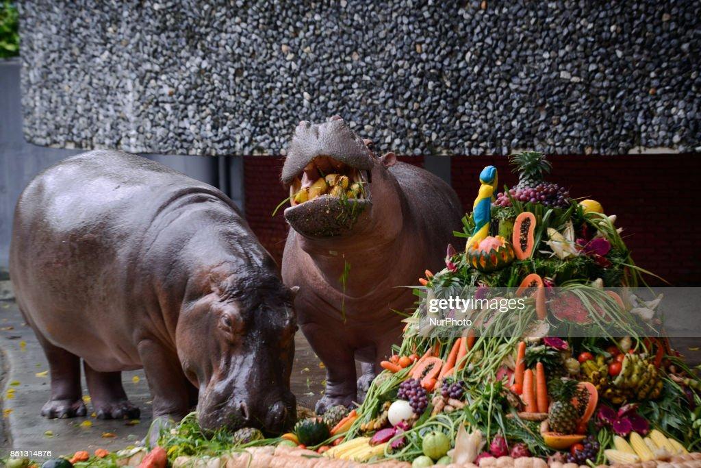 Phenomenal Hippopotamus Mali Eats Her Birthday Cake Made Of Fruit And Personalised Birthday Cards Veneteletsinfo