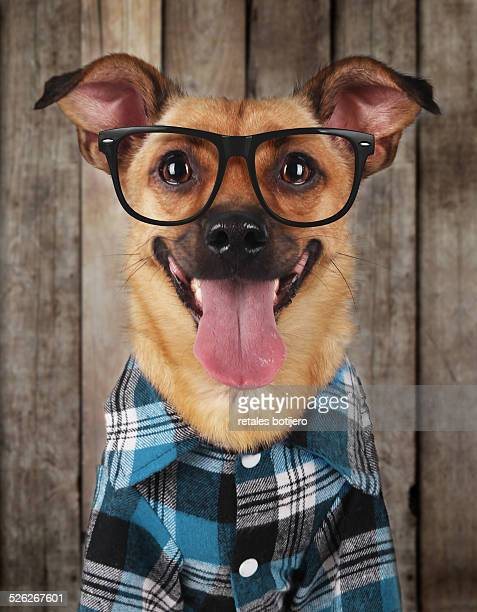 hipster dog - checked pattern stock pictures, royalty-free photos & images