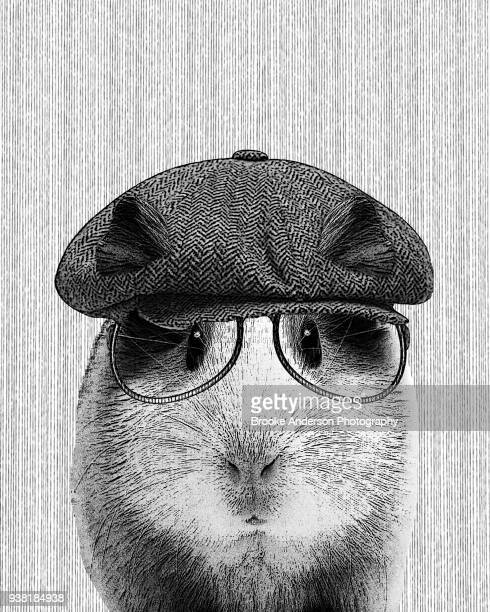 Hipster Guinea Pig  Illustration With Hat And Glasses