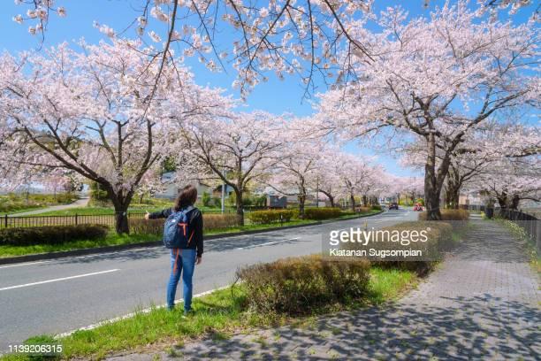 hiraizumi sakura romantic road - 盛岡市 ストックフォトと画像