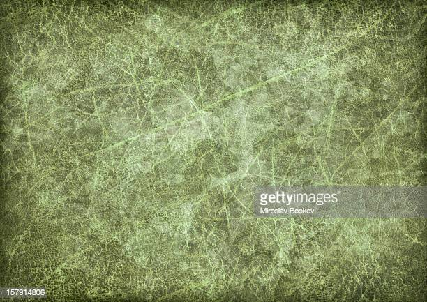 hi-res antique green animal skin parchment vignette grunge texture - kelly green stock pictures, royalty-free photos & images