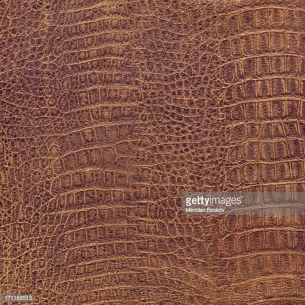 hi-res crocodilo couro marrom textura de azulejos sem costura - réptil - fotografias e filmes do acervo