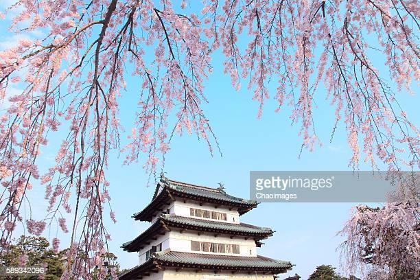 Hirosaki castle and cherry blossoms, Aomori Prefecture, Japan