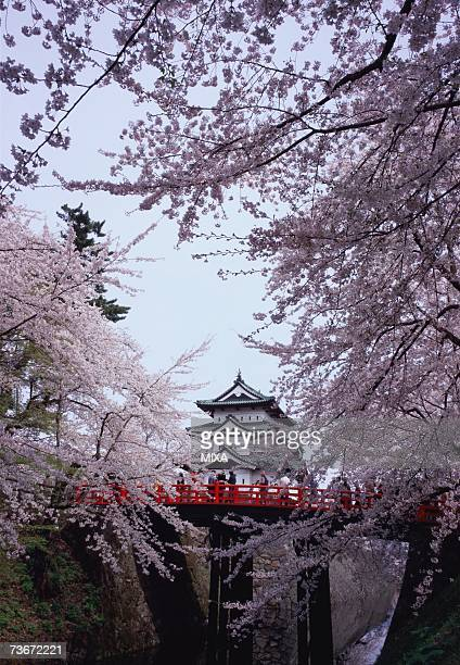 hirosaki castle in spring - hirosaki stock pictures, royalty-free photos & images