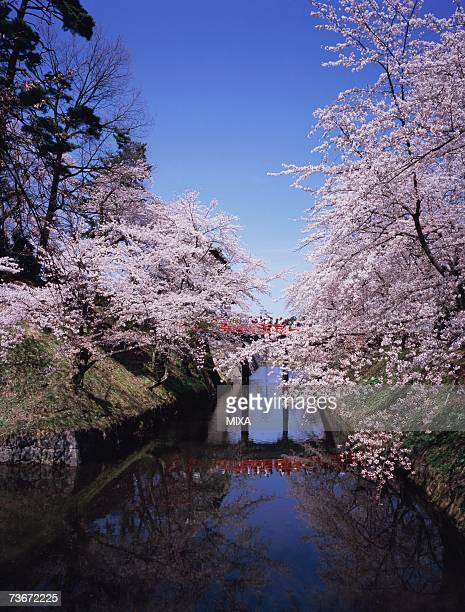 hirosaki castle in spring - hirosaki castle stock pictures, royalty-free photos & images