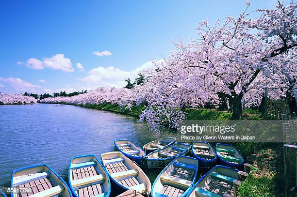 hirosaki moat in spring. - aomori prefecture stock pictures, royalty-free photos & images