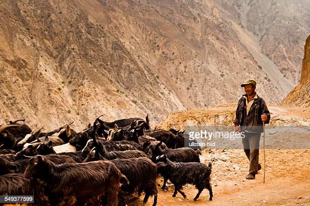 Hirte mit Ziegen im Naturreservat Meili Xue Shan