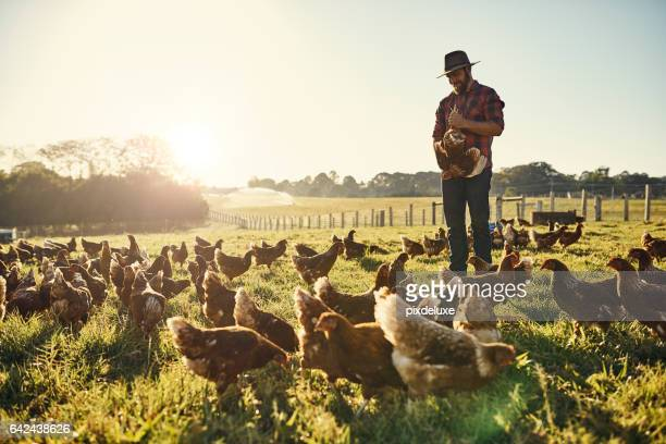 suas galinhas confiar nele implicitamente - trabalhador rural - fotografias e filmes do acervo
