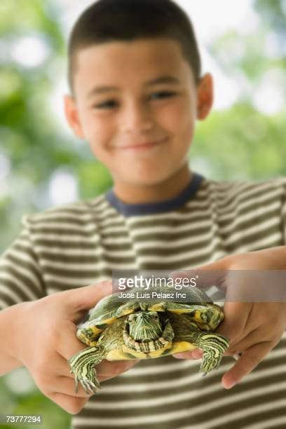hispanic boy holding turtle - reptile stock pictures, royalty-free photos & images