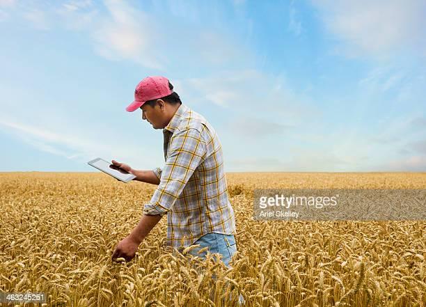 Hispanic farmer with digital tablet in wheat field