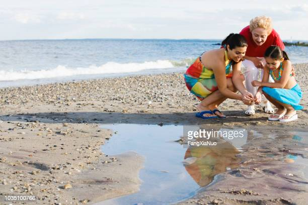 hispanic grandmother mother and daughter looking in tide pool at beach - connecticut stock pictures, royalty-free photos & images