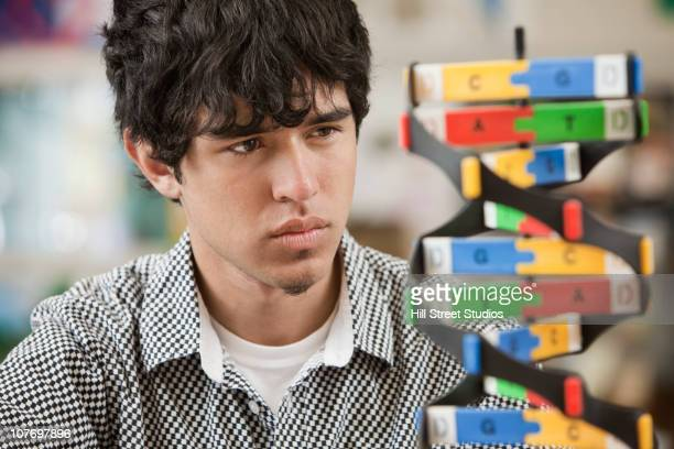 hispanic high school student looking at science model - gardena california stock pictures, royalty-free photos & images