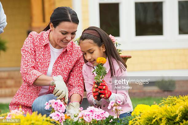 Hispanic mother and daughter gardening together