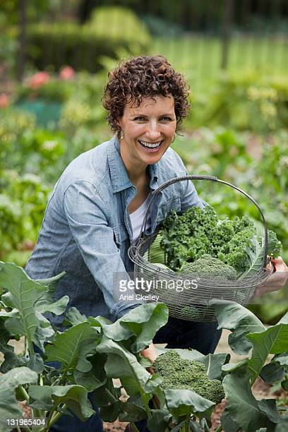 hispanic woman gathering broccoli in garden - one mature woman only stock pictures, royalty-free photos & images