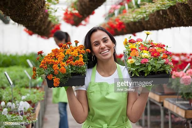 Hispanic woman holding flower trays in plant nursery