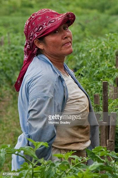 hispanic woman in us harvest - migrant worker stock photos and pictures
