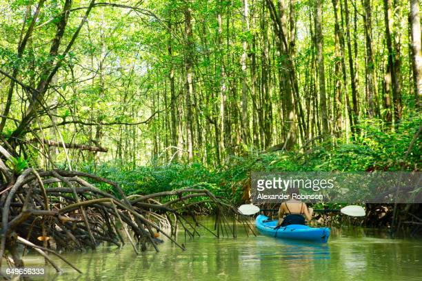 hispanic woman rowing kayak on river - mangroves stock pictures, royalty-free photos & images