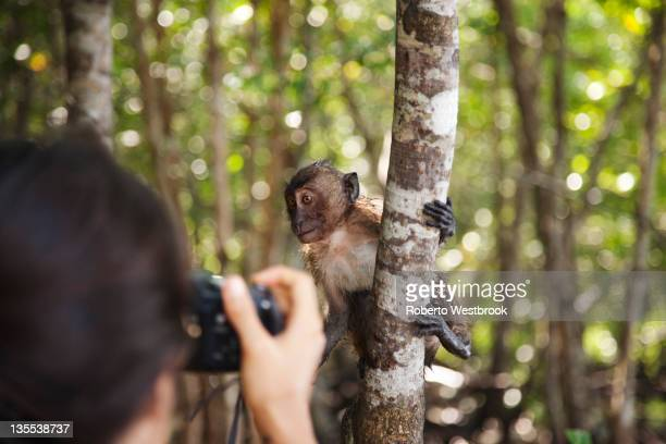 hispanic woman taking photograph of monkey in jungle - mangroves stock pictures, royalty-free photos & images
