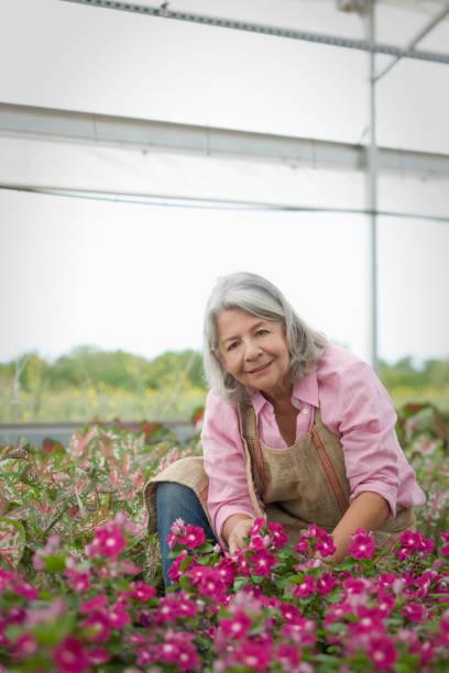 Hispanic worker tending to flowers in greenhouse