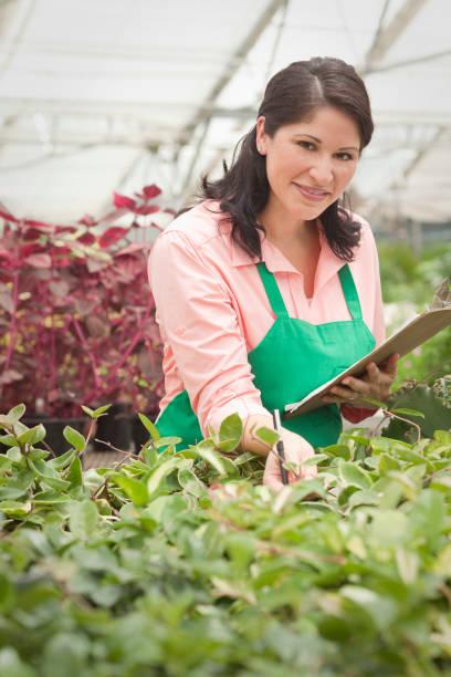 Hispanic worker tending to plants in greenhouse