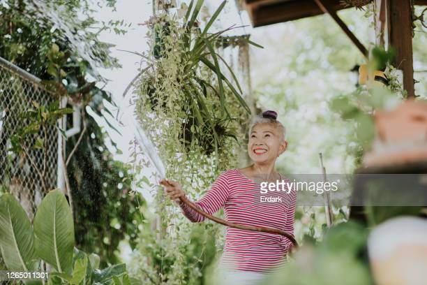 hispter woman watering the tree in the morning at home - ornamental plant stock pictures, royalty-free photos & images