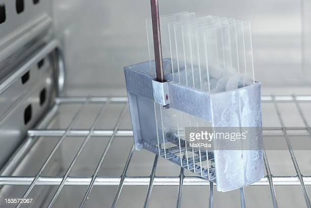 histopathology slide in incubator before staining - histology stock pictures, royalty-free photos & images