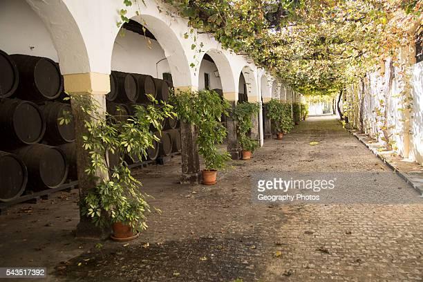 Historic courtyard with grapevines Bodegas Domecq Jerez de la Frontera Cadiz province Spain