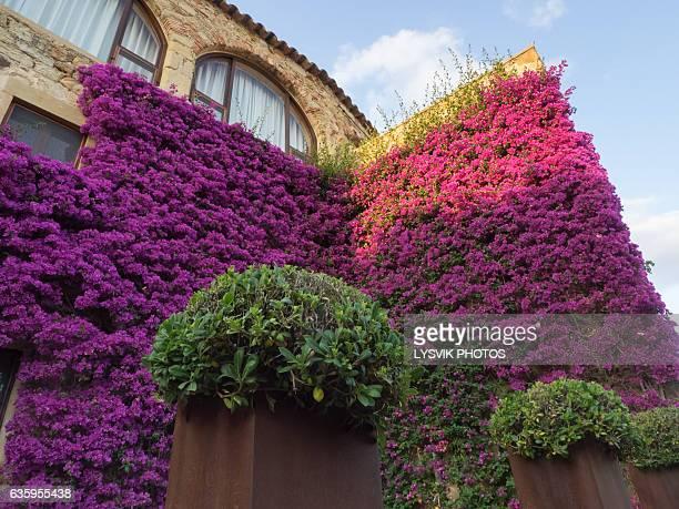 Historic La Muralla building with purple flowers in Pals, Gerona
