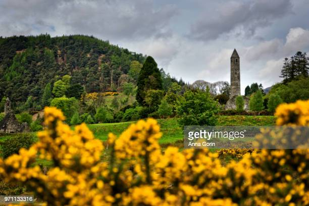 Historic round tower at Glendalough Monastic Site in Wicklow Mountains National Park, southeast Ireland, framed by spring gorse flowers