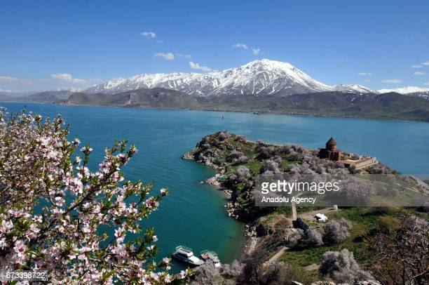 Historical Akdamar church is seen enclosed with trees in blossoms at Akdamar island in Lake Van during spring time in Turkey's Van province on April...