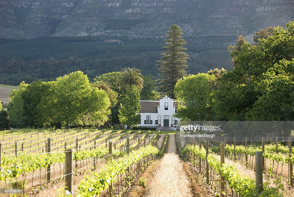 Historical Colonial Building in the Vineyards near Capetown : Stock Photo