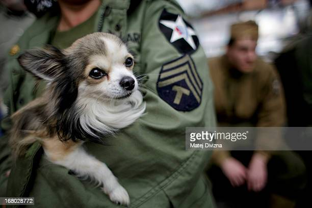 A history enthusiast dressed in WWII US Army uniform holds a dog during stop over of the 'Convoy of Liberty' event which drive through west Bohemian...