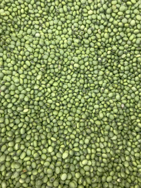 Hitashimame (green soy beans)