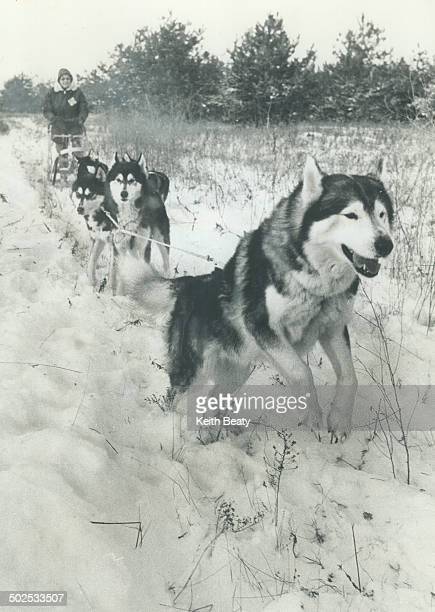 Hitting the trail with huskies Dogsledding has snowmobiling beat by a country mile according to Bess Paterson who's driving a team of five Siberian...