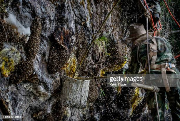 Hives can bee seen as Chinese ethnic Lisu honey hunter Mi Qiaoyun is surrounded by bees as he climbs on a makeshift ladder while gathering wild cliff...