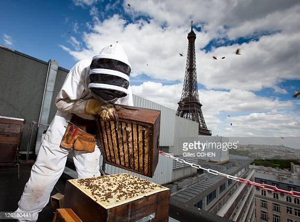 Hives on the rooftops of Pullmann hotel on June 9 2011 in Paris in France ***