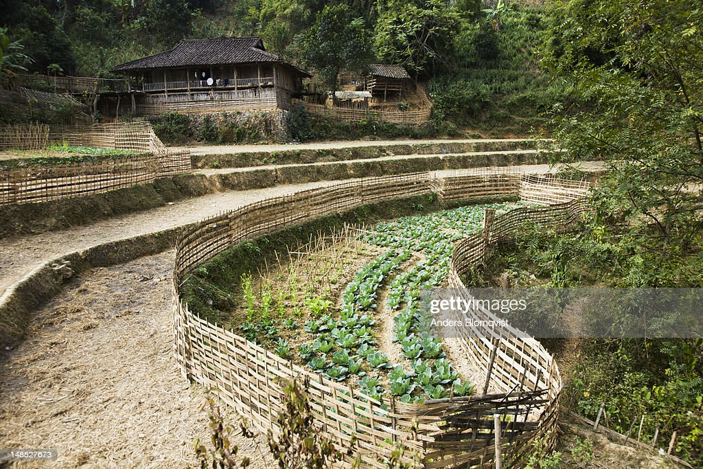Hmong Farmhouse And Well Tended Vegetable Garden High-Res Stock Photo -  Getty Images