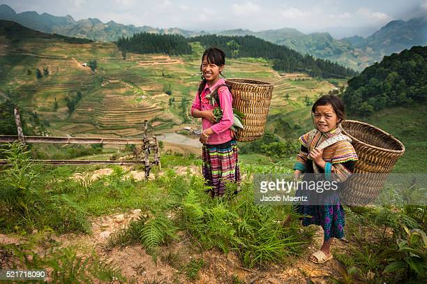 Hmong girls in field