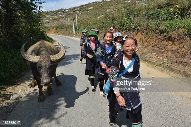 Hmong hilltribe women dress in indigo clothing enormous silver earrings and colourful hats in daily life on November 8 2013 in Sa Pa Vietnam They are...