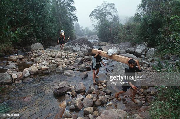 Hmong men carry massive 50 kilogram slabs of sandalwood across a stream and out of the Hoang Lien Son Nature Reserve in northern Vietnam In a single...