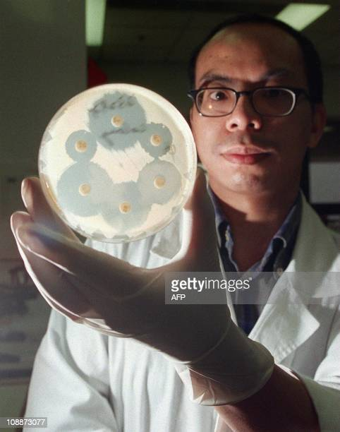Ho Poon a medical technologist at Queen Mary hospital Hong Kong holds 23 February a drugresistant Staphylococcus aureus culture a new superbug that...