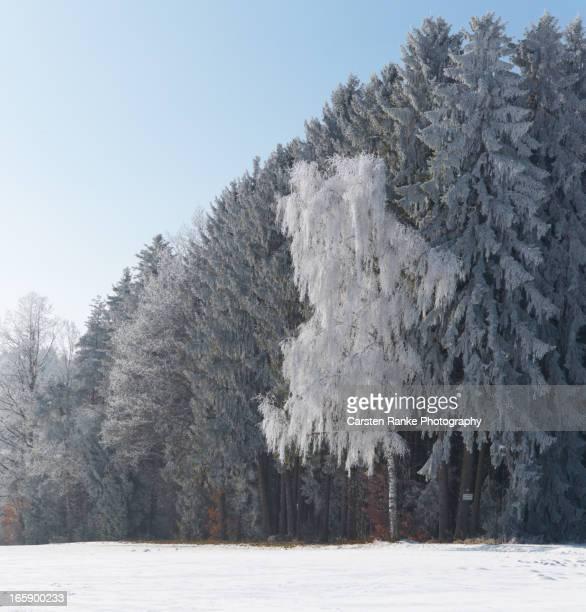 Hoar Frost, Mariazell