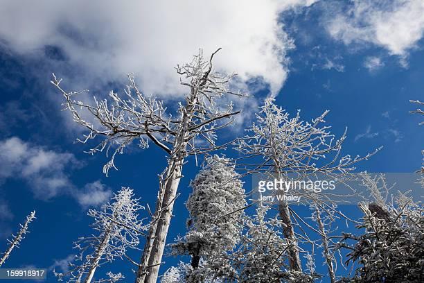 hoar frost on dead trees - clingman's dome fotografías e imágenes de stock