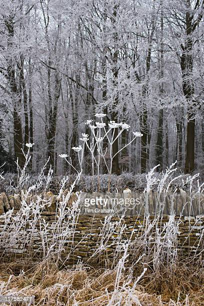 Hoar frost on winter's day in woodland in The Cotswolds Gloucestershire