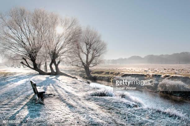 hoar frost - リッチモンド公園 ストックフォトと画像