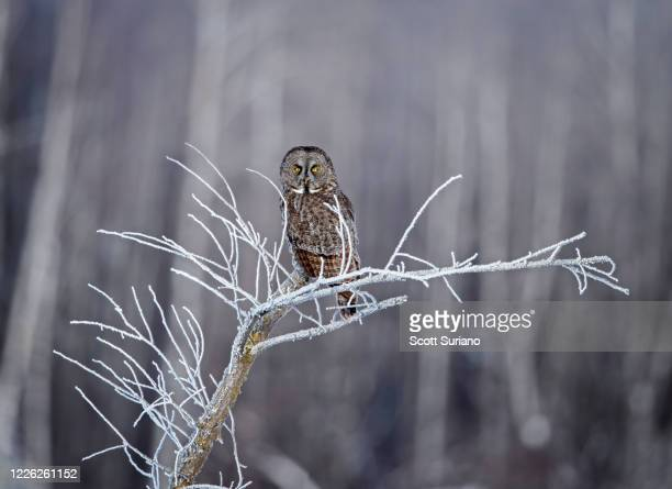 hoar-frosted hunter - minnesota stock pictures, royalty-free photos & images