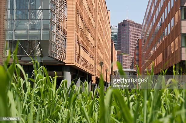 Hochhäuser am Potsdamer Platz in BerlinKreuzberg Im Vordergrund ein Schilfgürtel an einem künstlich angelegtem Gewässer Durch das Gewässer und die...