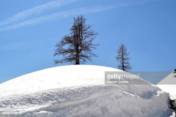 hochschwab mountains in spring - anhöhe stock-fotos und bilder