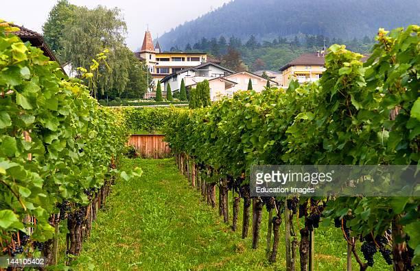 Hofkellerei Winery In Liechtenstein.